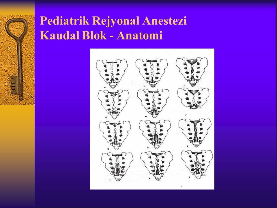Pediatrik Rejyonal Anestezi Kaudal Blok - Anatomi