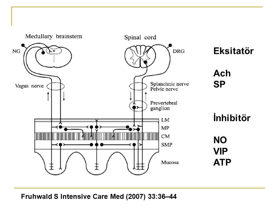 Eksitatör Ach SP İnhibitör NO VIP ATP Fruhwald S Intensive Care Med (2007) 33:36–44