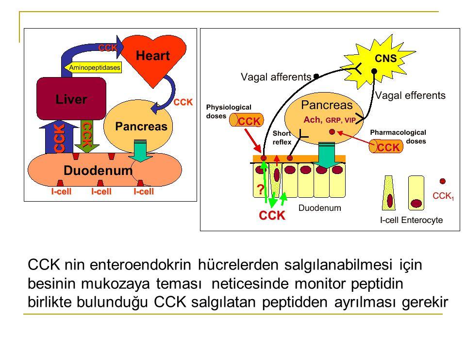 CCK nin enteroendokrin hücrelerden salgılanabilmesi için besinin mukozaya teması neticesinde monitor peptidin birlikte bulunduğu CCK salgılatan peptid