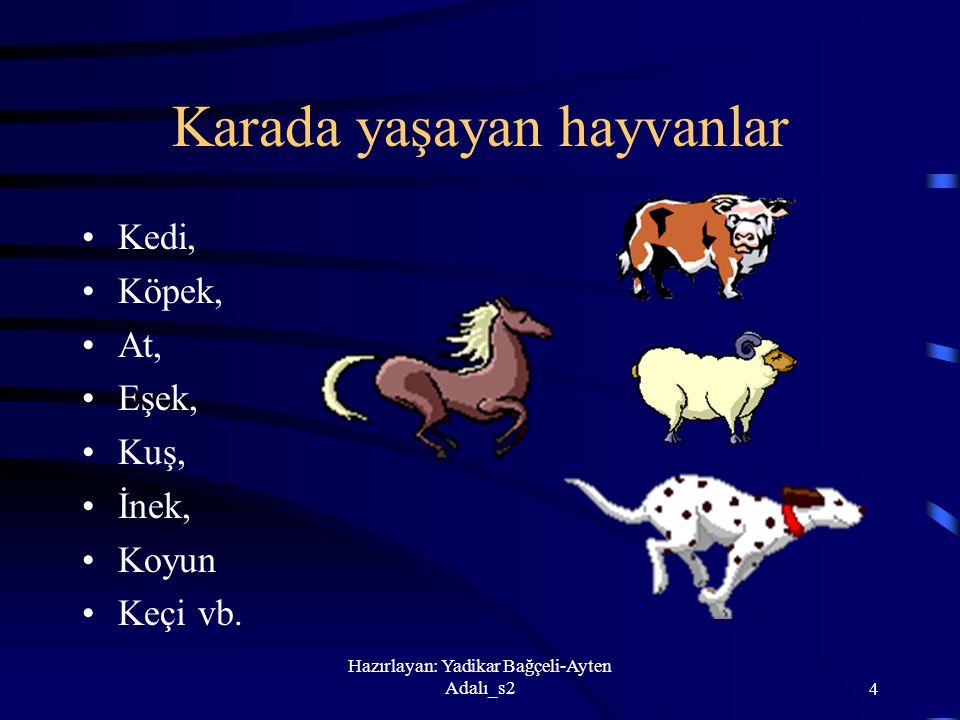 Hazırlayan: Yadikar Bağçeli-Ayten Adalı_s24 Karada yaşayan hayvanlar Kedi, Köpek, At, Eşek, Kuş, İnek, Koyun Keçi vb.