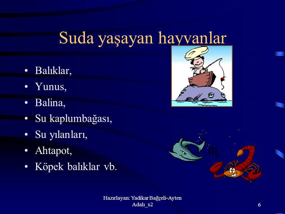 Hazırlayan: Yadikar Bağçeli-Ayten Adalı_s26 Suda yaşayan hayvanlar Balıklar, Yunus, Balina, Su kaplumbağası, Su yılanları, Ahtapot, Köpek balıklar vb.
