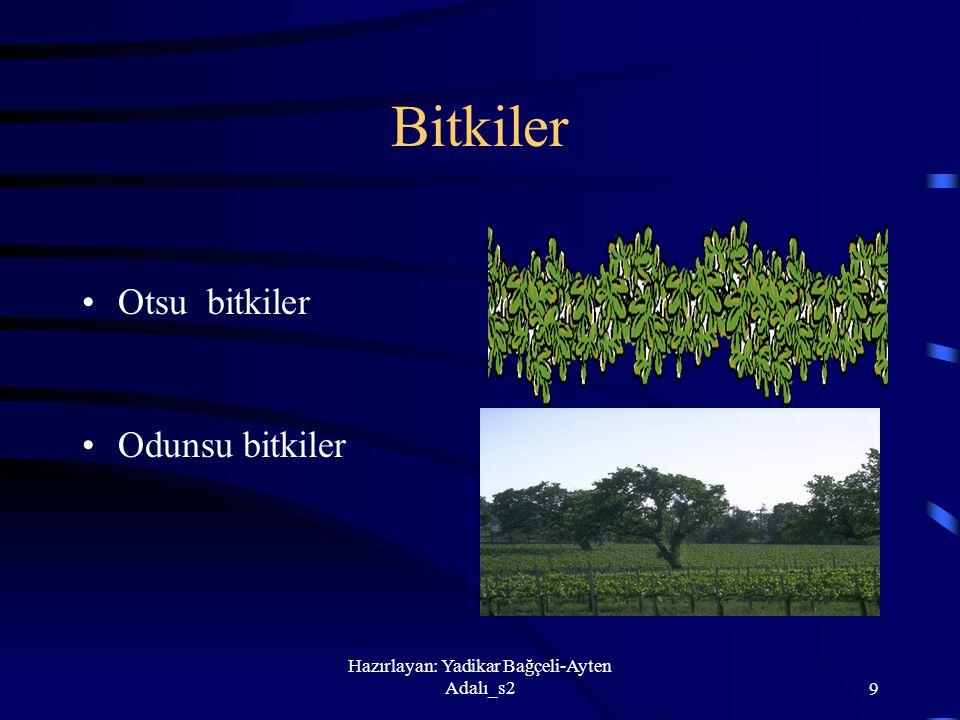 Hazırlayan: Yadikar Bağçeli-Ayten Adalı_s29 Bitkiler Otsu bitkiler Odunsu bitkiler