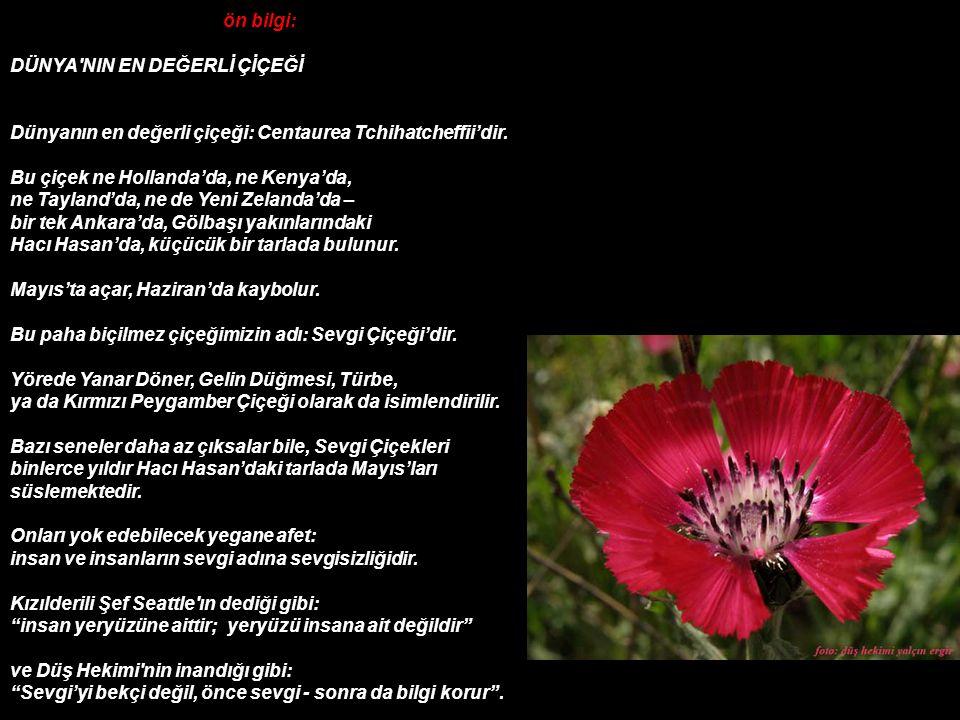 ön bilgi: DÜNYA NIN EN DEĞERLİ ÇİÇEĞİ Dünyanın en değerli çiçeği: Centaurea Tchihatcheffii'dir.