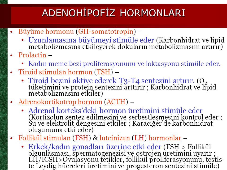 ADENOHİPOFİZ HORMONLARI Büyüme hormonu (GH-somatotropin) – Uzunlamasına büyümeyi stimüle eder (Karbonhidrat ve lipid metabolizmasına etkileyerek dokul