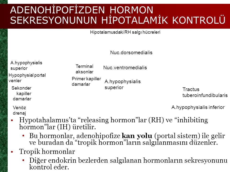 """ADENOHİPOFİZDEN HORMON SEKRESYONUNUN HİPOTALAMİK KONTROLÜ Hypotahalamus'ta """"releasing hormon""""lar (RH) ve """"inhibiting hormon""""lar (IH) üretilir. Bu horm"""