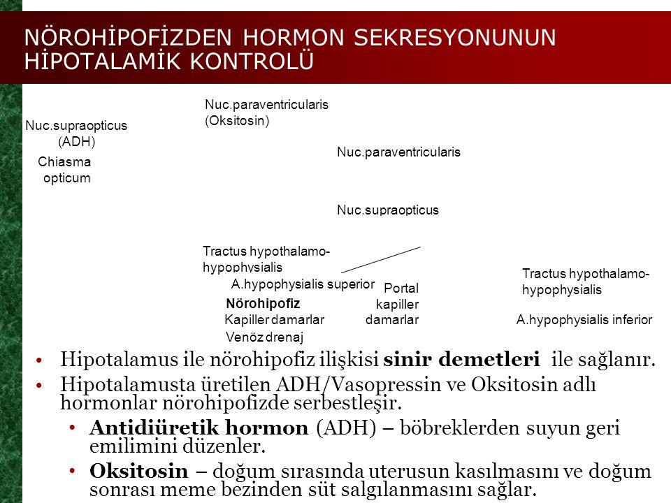 NÖROHİPOFİZDEN HORMON SEKRESYONUNUN HİPOTALAMİK KONTROLÜ Figure 25.7 Nuc.supraopticus (ADH) Chiasma opticum Nuc.paraventricularis (Oksitosin) Tractus