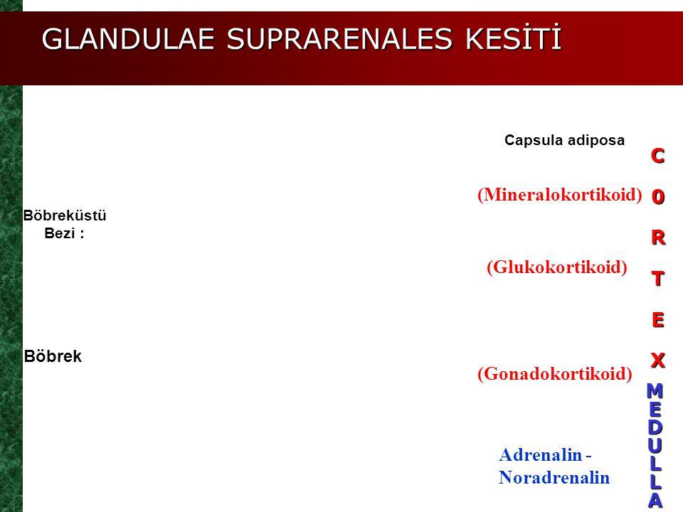 (Mineralokortikoid) (Glukokortikoid) (Gonadokortikoid) Adrenalin - Noradrenalin Böbrek Böbreküstü Bezi : Capsula adiposa GLANDULAE SUPRARENALES KESİTİ