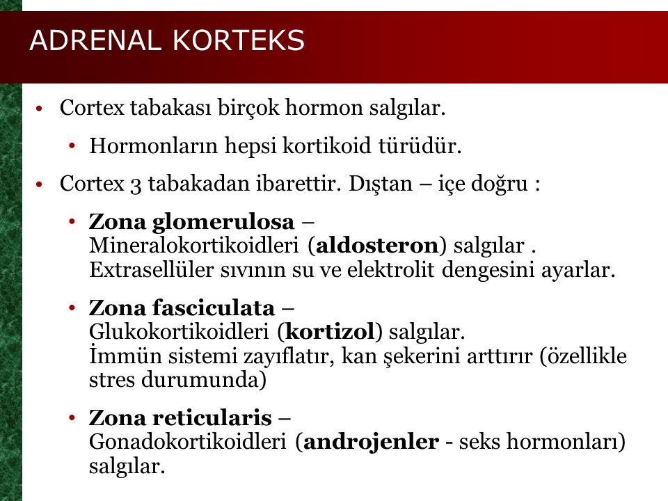 ADRENAL KORTEKS Cortex tabakası birçok hormon salgılar. Hormonların hepsi kortikoid türüdür. Cortex 3 tabakadan ibarettir. Dıştan – içe doğru : Zona g