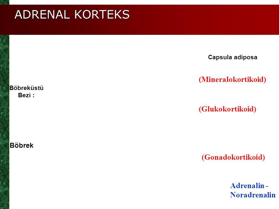 ADRENAL KORTEKS (Mineralokortikoid) (Glukokortikoid) (Gonadokortikoid) Adrenalin - Noradrenalin Böbrek Böbreküstü Bezi : Capsula adiposa