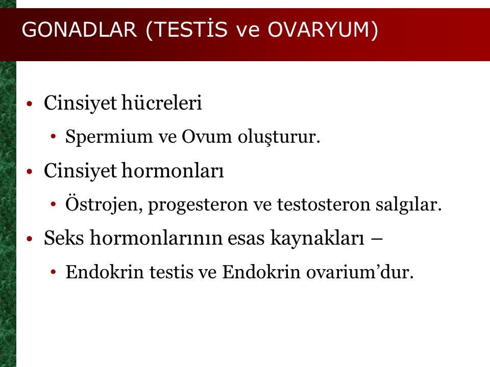 GONADLAR (TESTİS ve OVARYUM) Cinsiyet hücreleri Spermium ve Ovum oluşturur. Cinsiyet hormonları Östrojen, progesteron ve testosteron salgılar. Seks ho