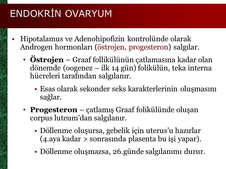 ENDOKRİN OVARYUM Hipotalamus ve Adenohipofizin kontrolünde olarak Androgen hormonları (östrojen, progesteron) salgılar. Östrojen – Graaf follikülünün