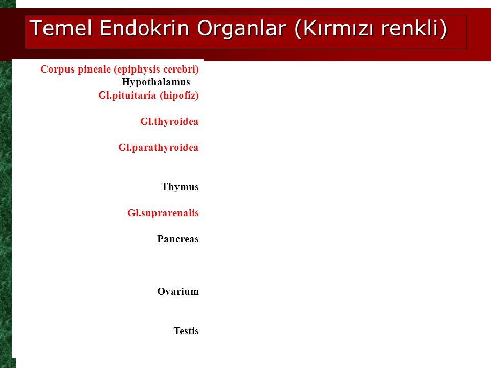 Temel Endokrin Organlar (Kırmızı renkli) Corpus pineale (epiphysis cerebri) Gl.pituitaria (hipofiz) Gl.thyroidea Gl.parathyroidea Thymus Gl.suprarenal