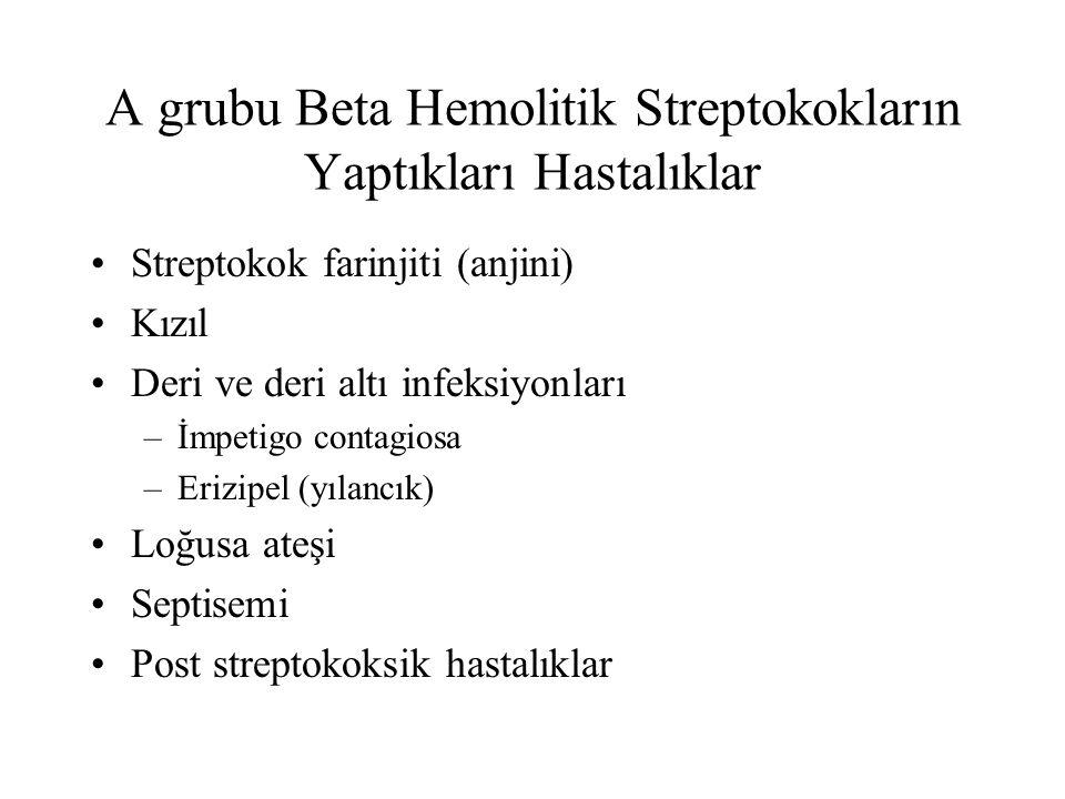A grubu Beta Hemolitik Streptokokların Yaptıkları Hastalıklar Streptokok farinjiti (anjini) Kızıl Deri ve deri altı infeksiyonları –İmpetigo contagios