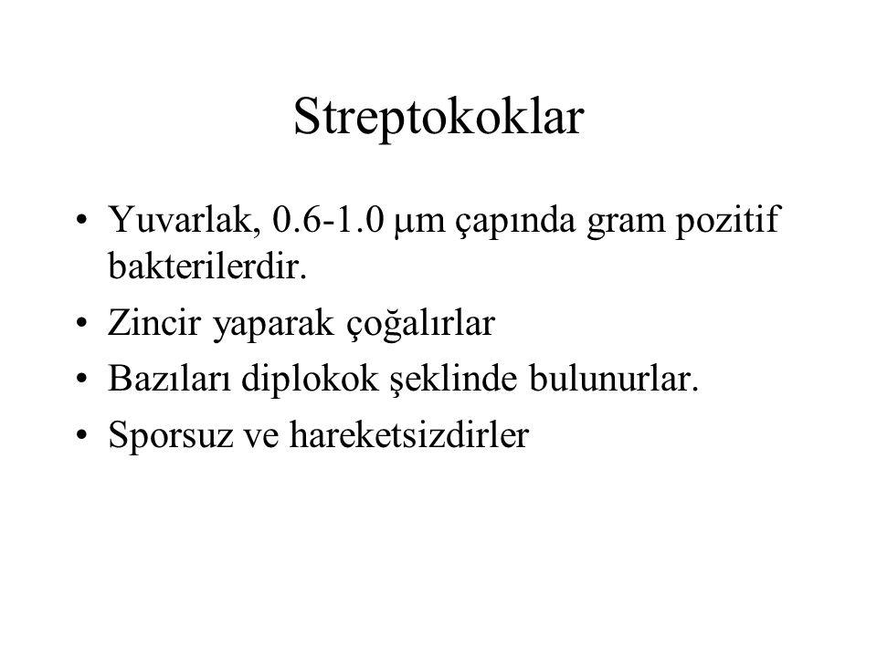 Streptococcus (Gram boyama)