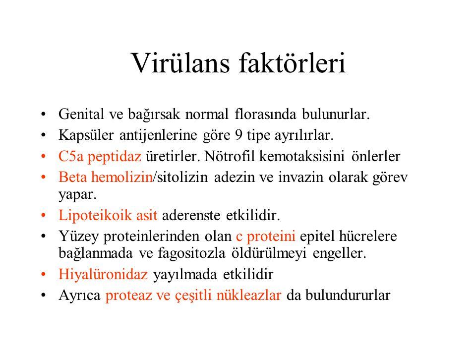Virülans faktörleri Genital ve bağırsak normal florasında bulunurlar. Kapsüler antijenlerine göre 9 tipe ayrılırlar. C5a peptidaz üretirler. Nötrofil
