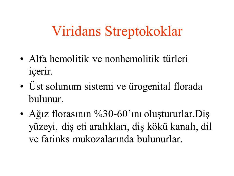 Viridans Streptokoklar Alfa hemolitik ve nonhemolitik türleri içerir. Üst solunum sistemi ve ürogenital florada bulunur. Ağız florasının %30-60'ını ol