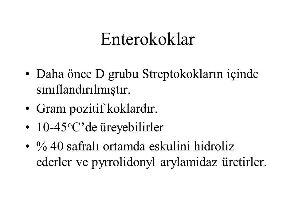 Enterokoklar Daha önce D grubu Streptokokların içinde sınıflandırılmıştır. Gram pozitif koklardır. 10-45 o C'de üreyebilirler % 40 safralı ortamda esk
