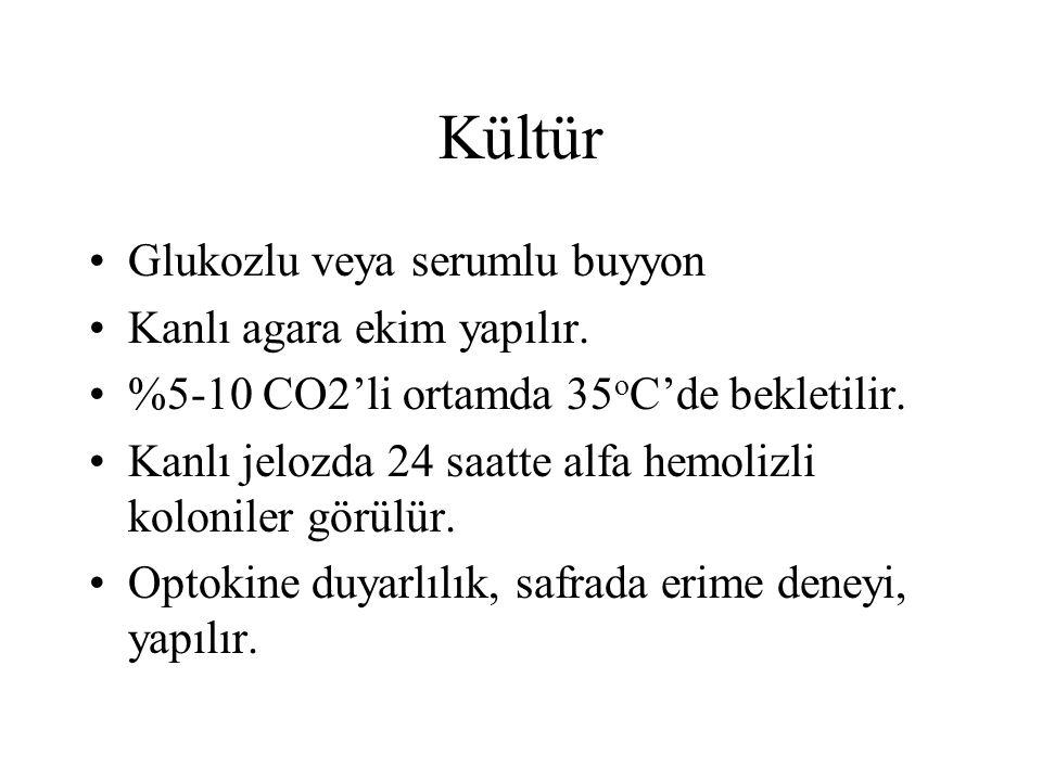 Kültür Glukozlu veya serumlu buyyon Kanlı agara ekim yapılır. %5-10 CO2'li ortamda 35 o C'de bekletilir. Kanlı jelozda 24 saatte alfa hemolizli koloni