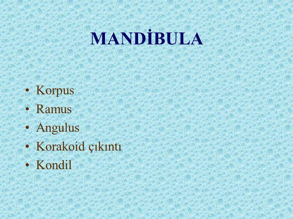 MANDİBULA Korpus Ramus Angulus Korakoid çıkıntı Kondil