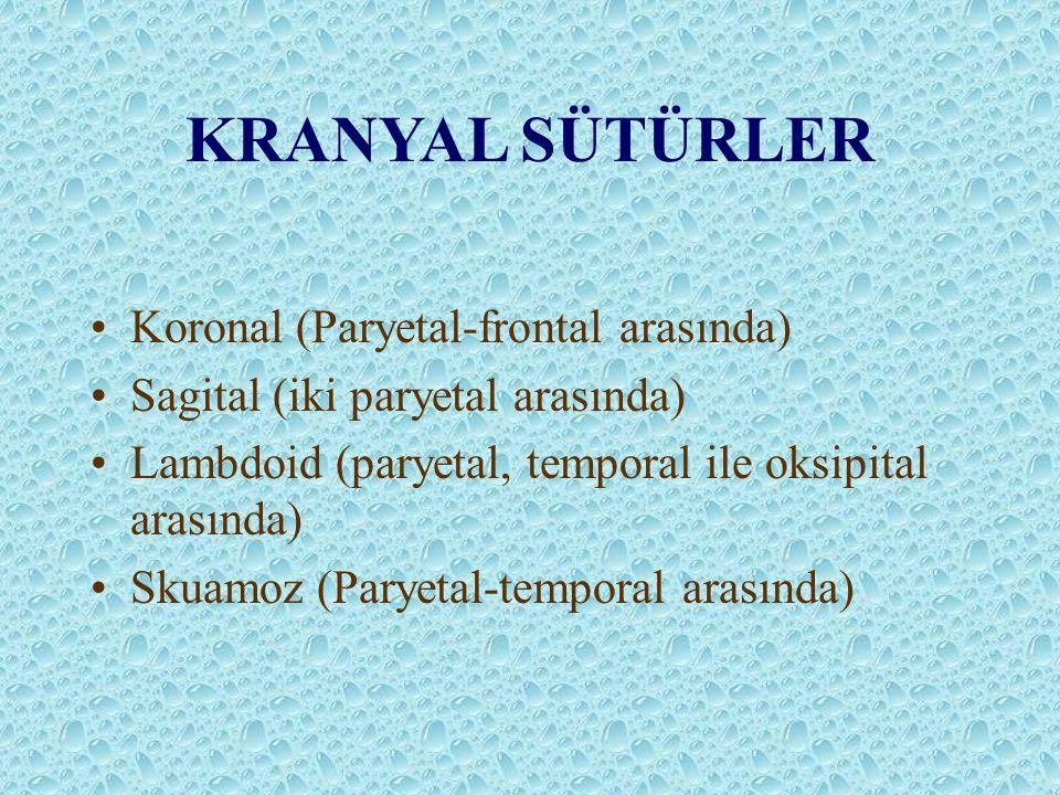 KRANYAL SÜTÜRLER Koronal (Paryetal-frontal arasında) Sagital (iki paryetal arasında) Lambdoid (paryetal, temporal ile oksipital arasında) Skuamoz (Par