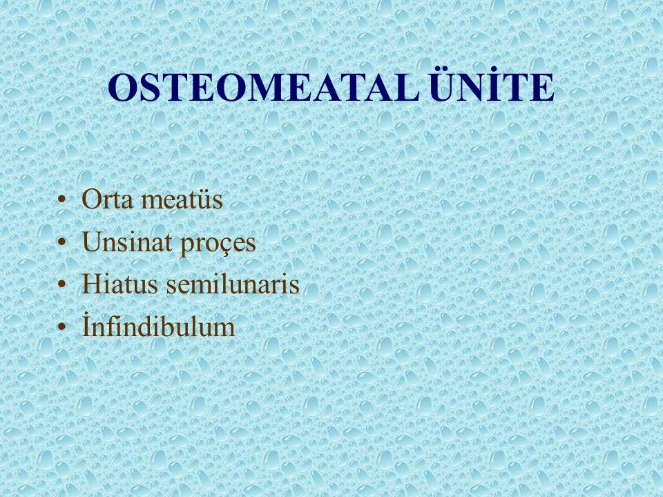 OSTEOMEATAL ÜNİTE Orta meatüs Unsinat proçes Hiatus semilunaris İnfindibulum