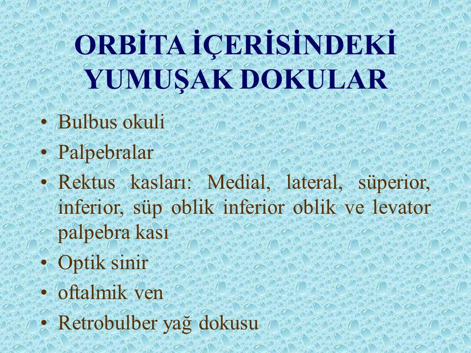 ORBİTA İÇERİSİNDEKİ YUMUŞAK DOKULAR Bulbus okuli Palpebralar Rektus kasları: Medial, lateral, süperior, inferior, süp oblik inferior oblik ve levator