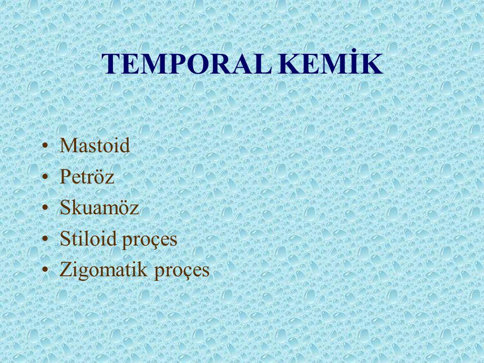TEMPORAL KEMİK Mastoid Petröz Skuamöz Stiloid proçes Zigomatik proçes