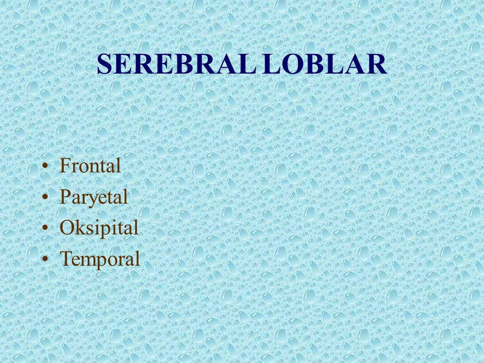 SEREBRAL LOBLAR Frontal Paryetal Oksipital Temporal