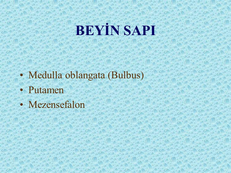 BEYİN SAPI Medulla oblangata (Bulbus) Putamen Mezensefalon
