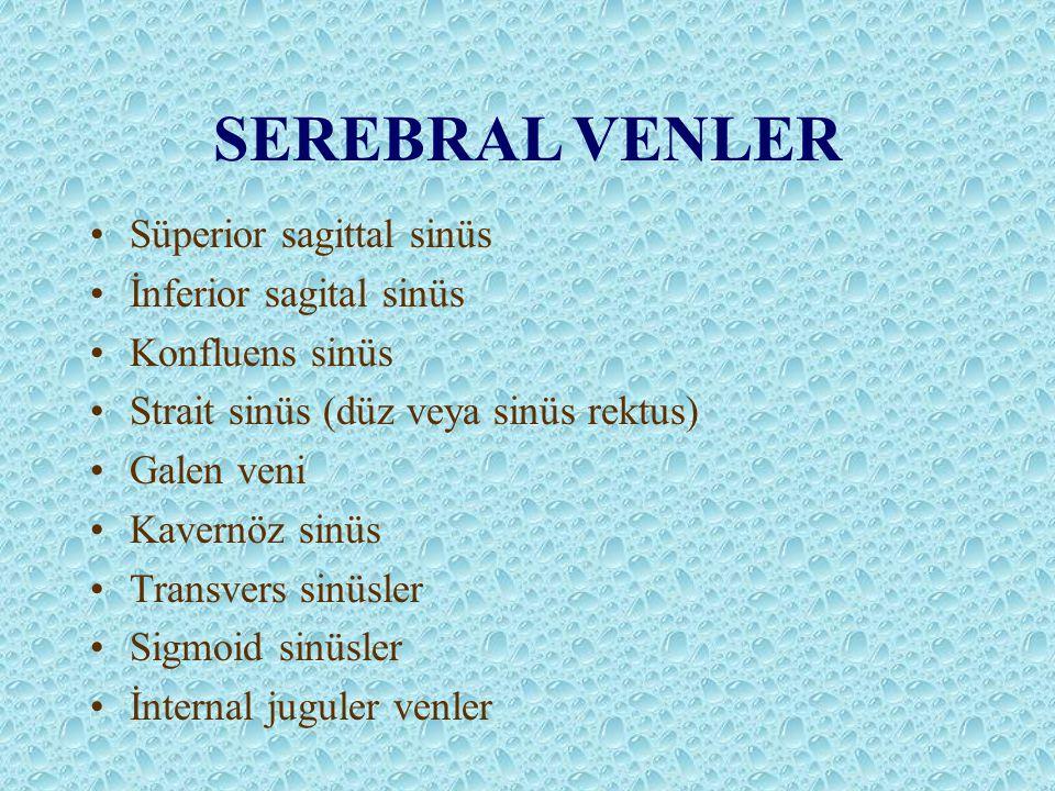 SEREBRAL VENLER Süperior sagittal sinüs İnferior sagital sinüs Konfluens sinüs Strait sinüs (düz veya sinüs rektus) Galen veni Kavernöz sinüs Transvers sinüsler Sigmoid sinüsler İnternal juguler venler