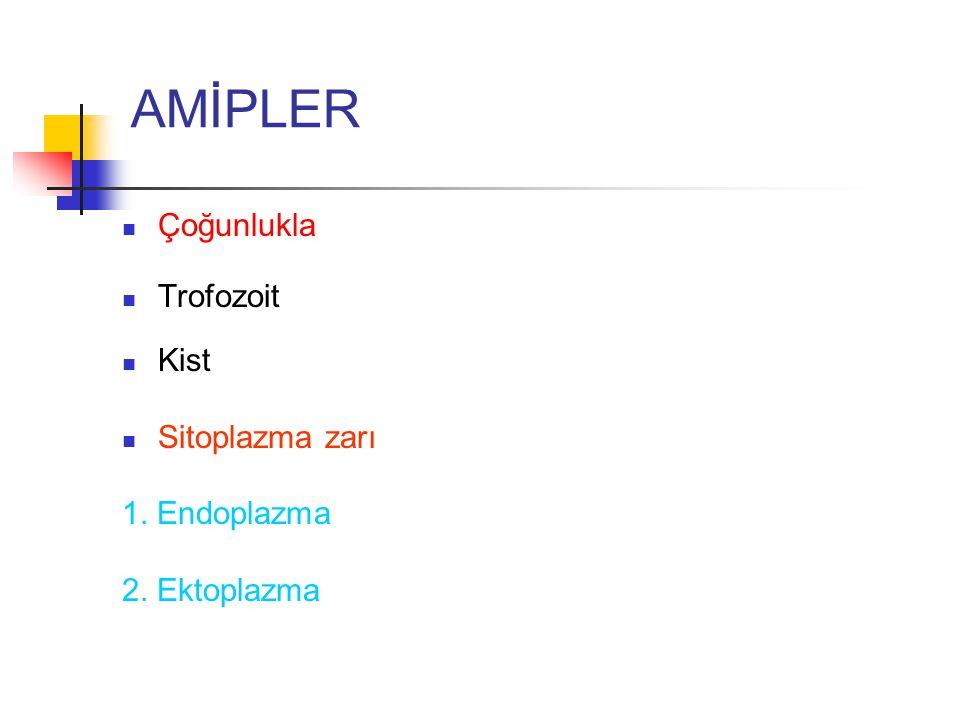 AMİPLER Çoğunlukla Trofozoit Kist Sitoplazma zarı 1. Endoplazma 2. Ektoplazma