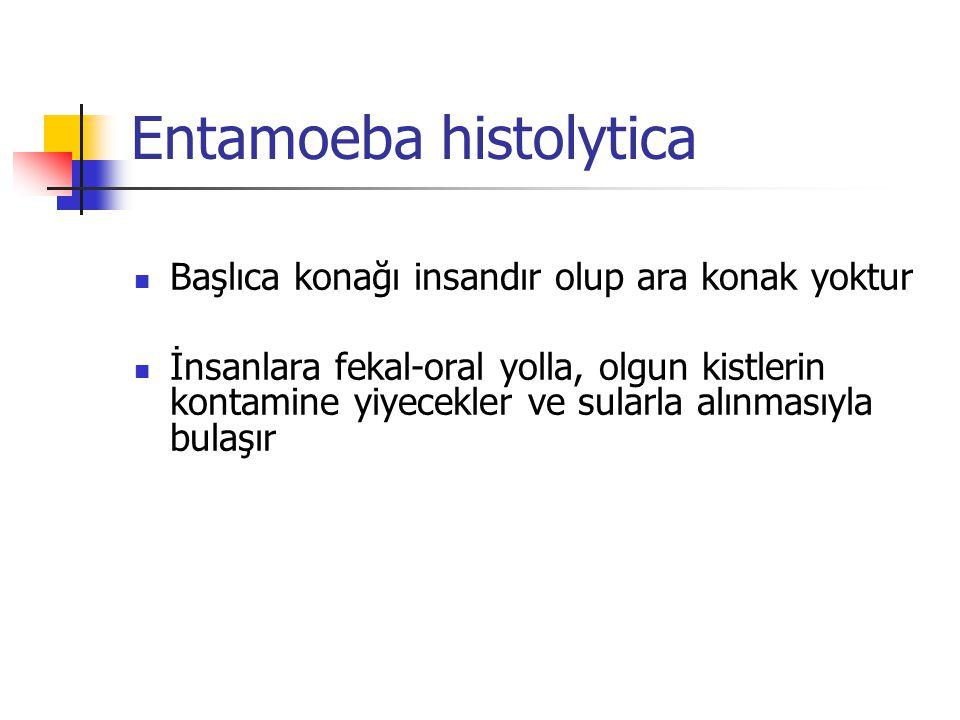 Entamoeba histolytica Başlıca konağı insandır olup ara konak yoktur İnsanlara fekal-oral yolla, olgun kistlerin kontamine yiyecekler ve sularla alınmasıyla bulaşır