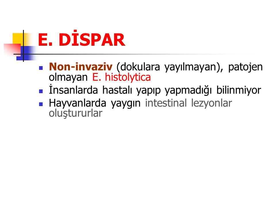 E.DİSPAR Non-invaziv (dokulara yayılmayan), patojen olmayan E.