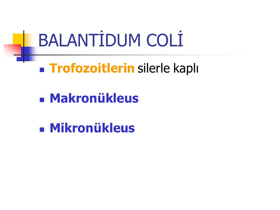 BALANTİDUM COLİ