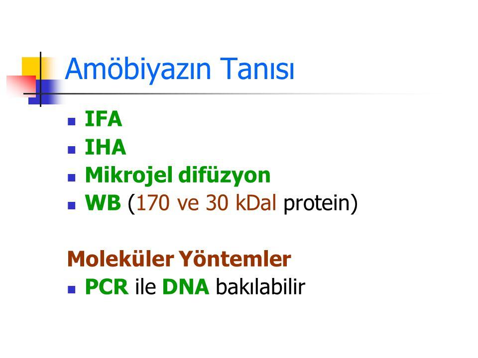 Amöbiyazın Tanısı IFA IHA Mikrojel difüzyon WB (170 ve 30 kDal protein) Moleküler Yöntemler PCR ile DNA bakılabilir
