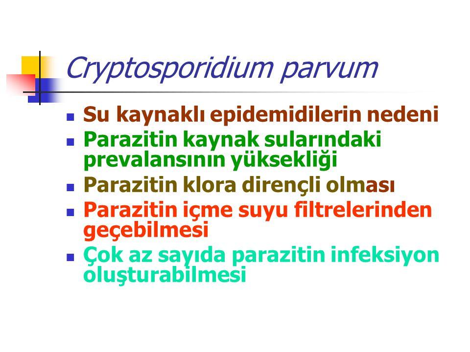 Cryptosporidium parvum Su kaynaklı epidemidilerin nedeni Parazitin kaynak sularındaki prevalansının yüksekliği Parazitin klora dirençli olması Parazitin içme suyu filtrelerinden geçebilmesi Çok az sayıda parazitin infeksiyon oluşturabilmesi