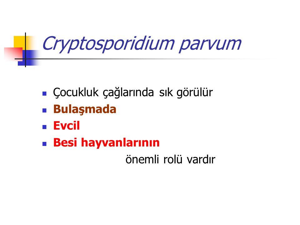 Cryptosporidium parvum Çocukluk çağlarında sık görülür Bulaşmada Evcil Besi hayvanlarının önemli rolü vardır