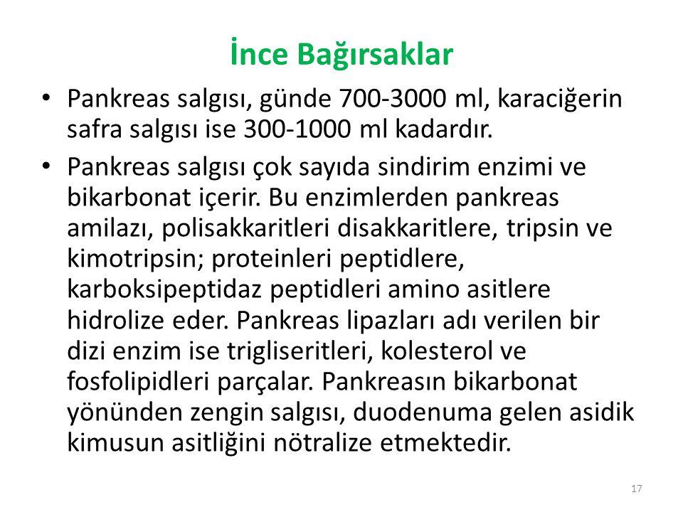 İnce Bağırsaklar Pankreas salgısı, günde 700-3000 ml, karaciğerin safra salgısı ise 300-1000 ml kadardır. Pankreas salgısı çok sayıda sindirim enzimi