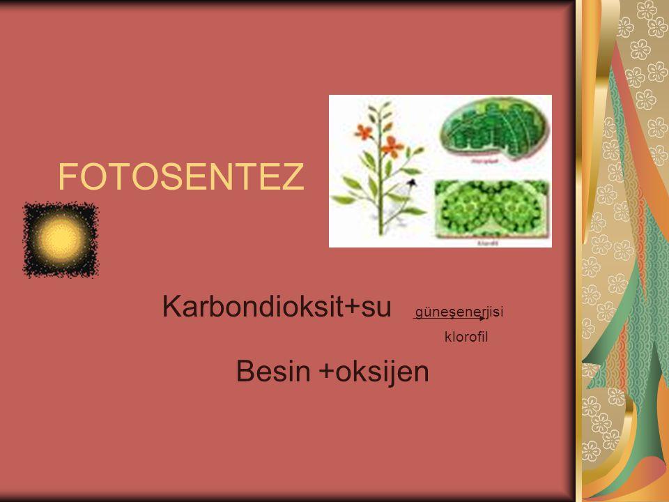 FOTOSENTEZ Karbondioksit+su güneşenerjisi klorofil Besin +oksijen