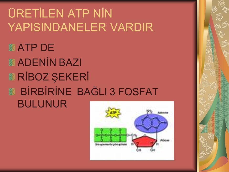 ÜRETİLEN ATP NİN YAPISINDANELER VARDIR ATP DE ADENİN BAZI RİBOZ ŞEKERİ BİRBİRİNE BAĞLI 3 FOSFAT BULUNUR