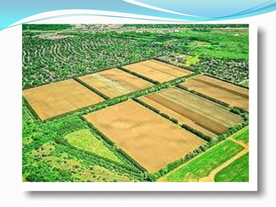 Batıda arazi düzenlemesi.