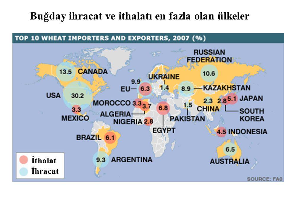 Buğday ihracat ve ithalatı en fazla olan ülkeler İthalat İhracat