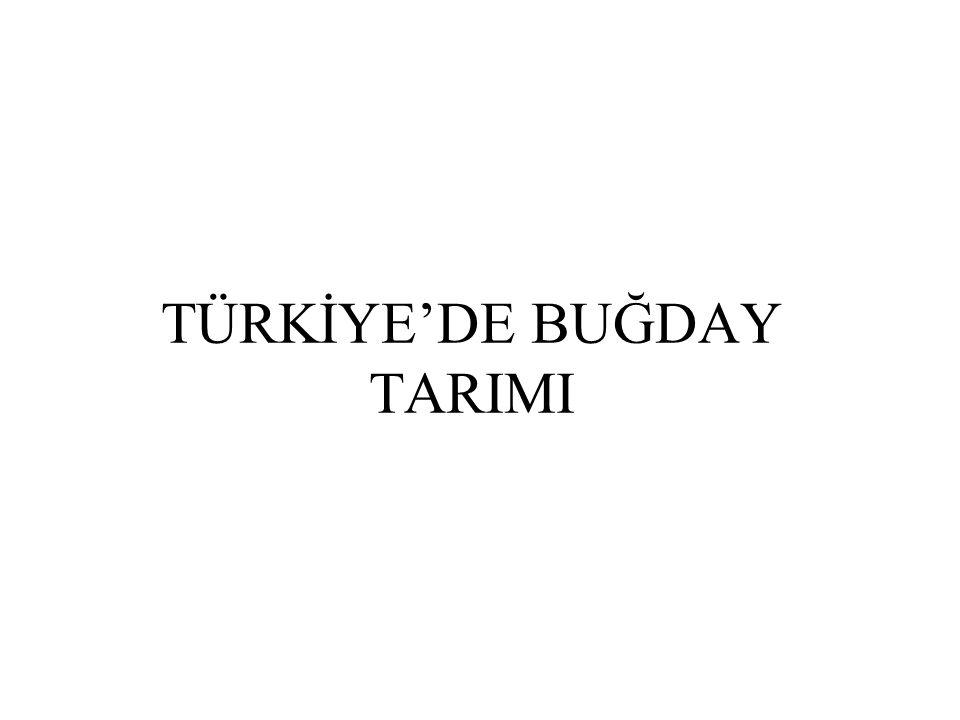TÜRKİYE'DE BUĞDAY TARIMI
