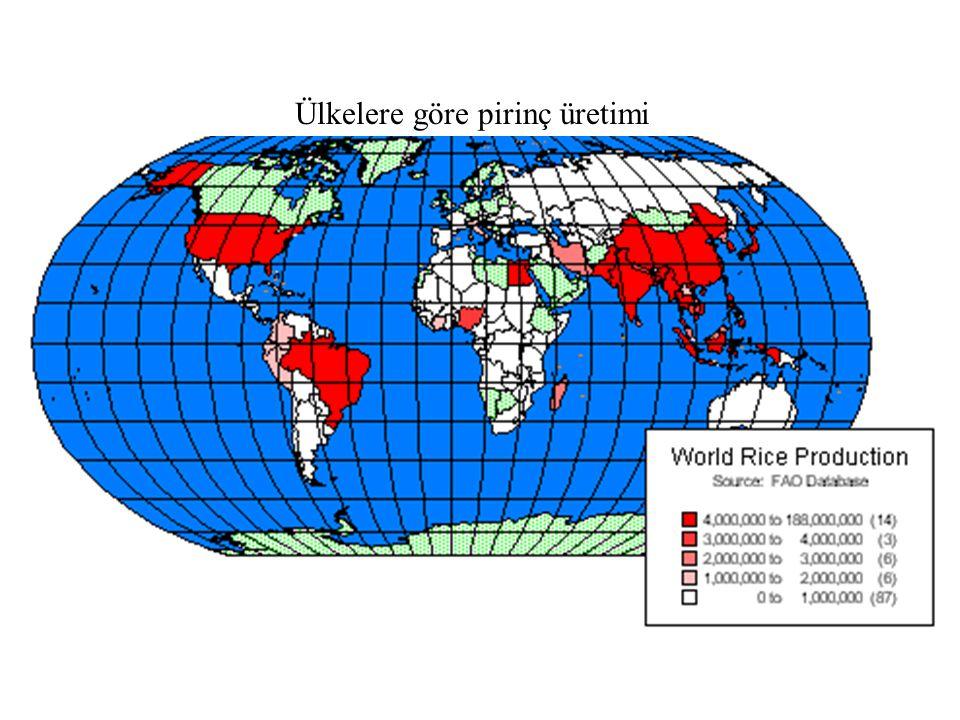 Ülkelere göre pirinç üretimi