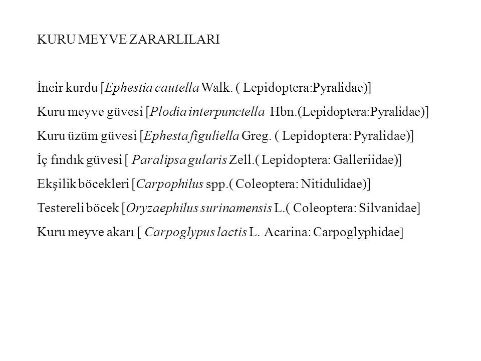KURU MEYVE ZARARLILARI İncir kurdu [Ephestia cautella Walk. ( Lepidoptera:Pyralidae)] Kuru meyve güvesi [Plodia interpunctella Hbn.(Lepidoptera:Pyrali