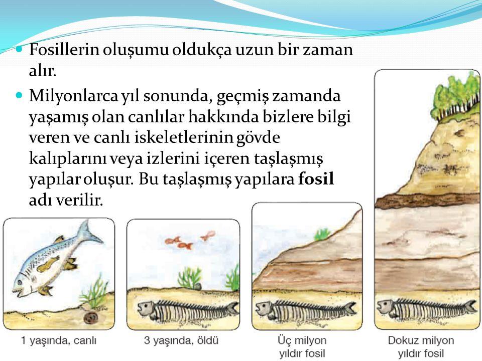 Fosillerin oluşumu oldukça uzun bir zaman alır. Milyonlarca yıl sonunda, geçmiş zamanda yaşamış olan canlılar hakkında bizlere bilgi veren ve canlı is