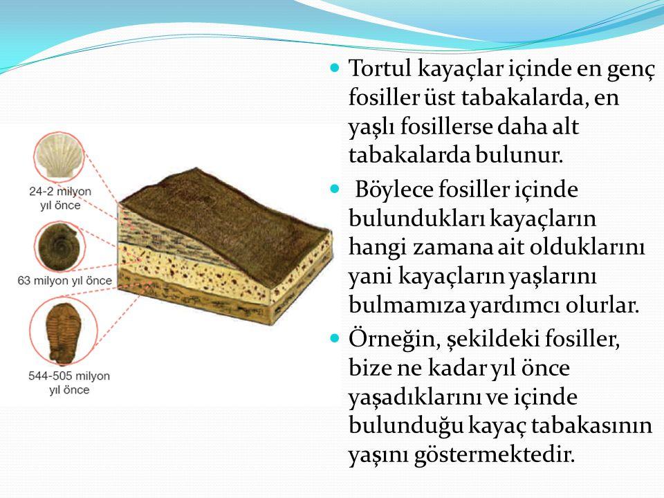 Tortul kayaçlar içinde en genç fosiller üst tabakalarda, en yaşlı fosillerse daha alt tabakalarda bulunur. Böylece fosiller içinde bulundukları kayaçl