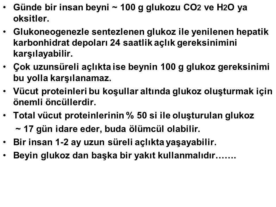 Günde bir insan beyni ~ 100 g glukozu CO 2 ve H 2 O ya oksitler. Glukoneogenezle sentezlenen glukoz ile yenilenen hepatik karbonhidrat depoları 24 saa