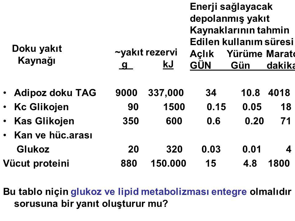 Adipoz doku TAG 9000 337,000 34 10.8 4018 Kc Glikojen 90 1500 0.15 0.05 18 Kas Glikojen 350 600 0.6 0.20 71 Kan ve hüc.arası Glukoz 20 320 0.03 0.01 4