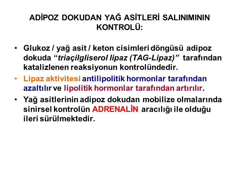 """ADİPOZ DOKUDAN YAĞ ASİTLERİ SALINIMININ KONTROLÜ: Glukoz / yağ asit / keton cisimleri döngüsü adipoz dokuda """"triaçilgliserol lipaz (TAG-Lipaz)"""" tarafı"""